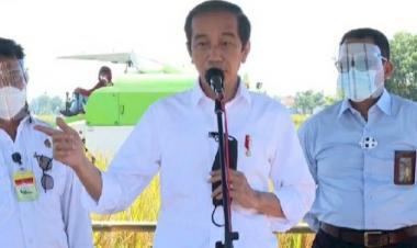 Jokowi Pastikan Impor Beras Stop Hingga Juni, Setelah Itu?